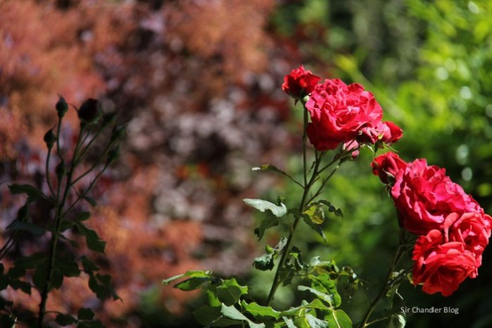 bariloche-casa-flores