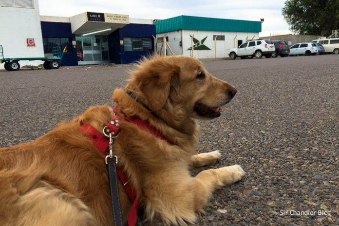 phoebe-espera-aeropuerto