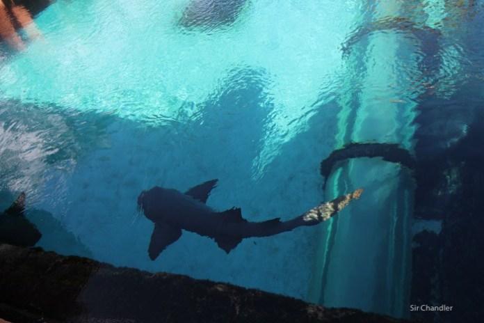 tiburones-atlantis-bahamas