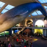 El museo de historia natural de Nueva York