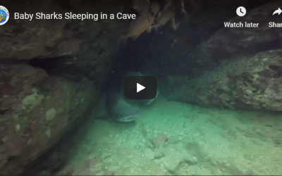 Baby Sharks Sleeping in a Cave