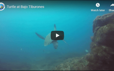 Turtle at Bajo Tiburones