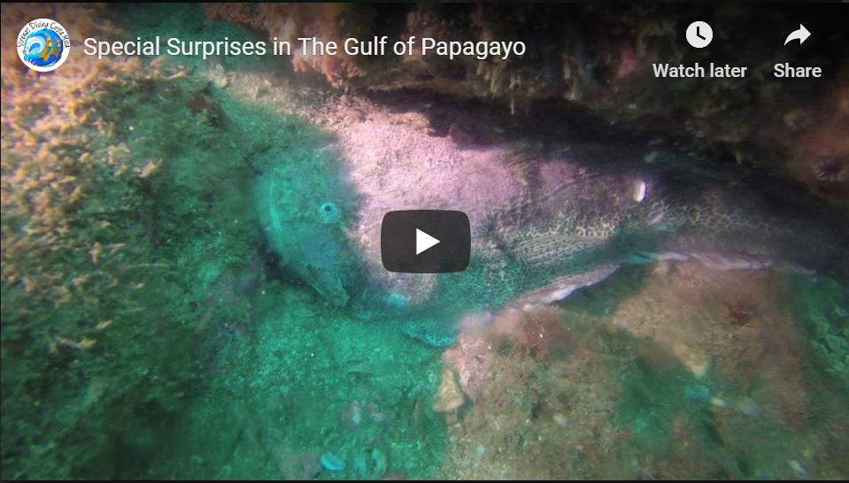 Special Surprises in The Gulf of Papagayo