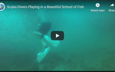 Scuba Divers Playing in a Beautiful School of Fish