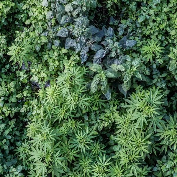 plant marker general2