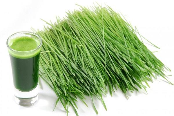 Scutch grass