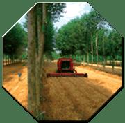 GdL SISEF: Agroforestry: Alberi, Colture, Allevamenti