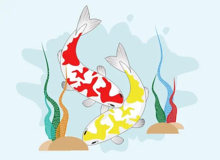 Cara Menggambar Ikan Koi | Siswapedia