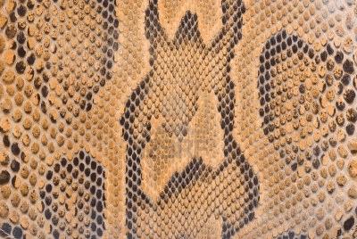 Foto que ilustra estampa utilizado pelas grifes