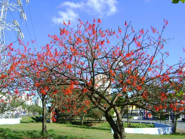 Suinã é uma das Flores Que Suportam o Sol Forte