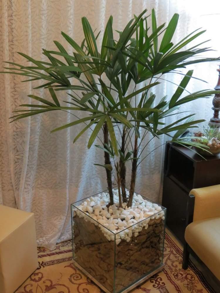 Palmeira de Ráfia é uma das plantas perfeitas para decorar o interior da sua casa