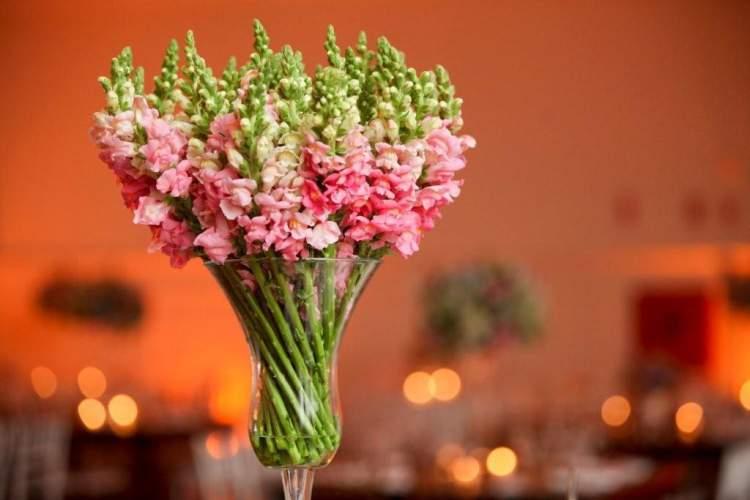 A flor boca-de-leão simboliza a elevação espiritual