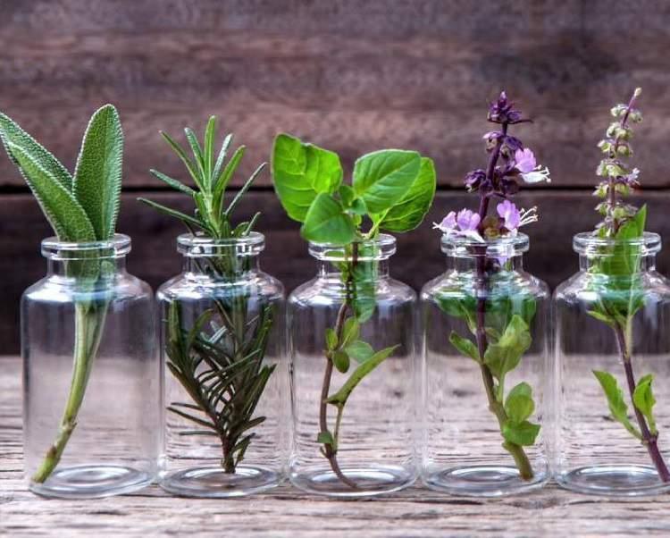 b34094eaa87 9 plantas decorativas que você pode cultivar em um copo com água ...
