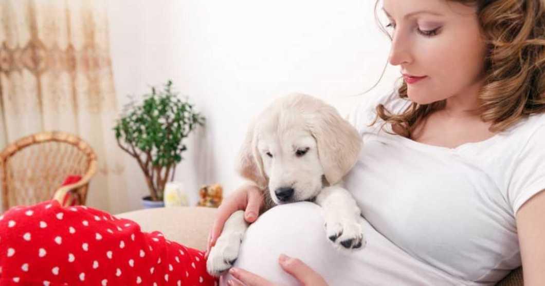 Cachorros podem sentir sinais de gravidez humana
