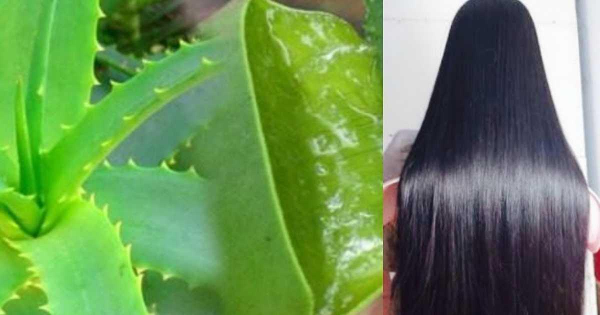 Receita caseira com óleo de babosa para fazer o cabelo crescer