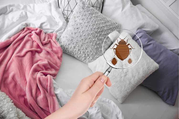 Travesseiros e almofadas são dois dos objetos de casa que são muito sujos