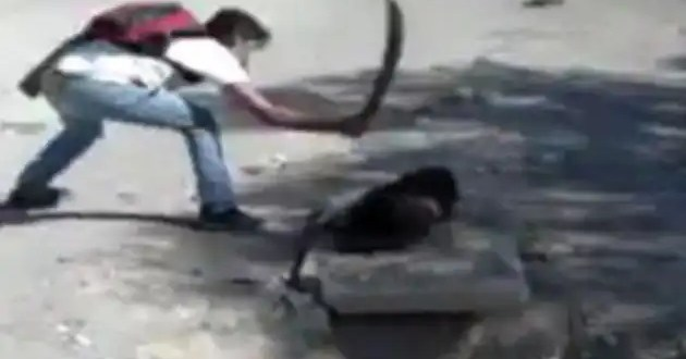 Matan a machetazos a una perrita y los suben a internet