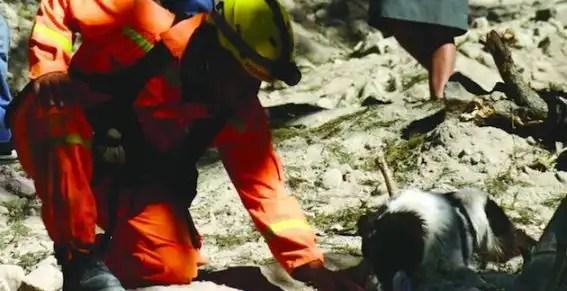 Perros localizan el cuerpo de su amo víctima del terremoto en Guatemala
