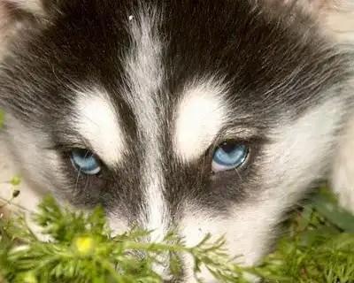 Logran revertir parálisis en perros