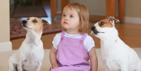 Las mejores razas de perros para los niños