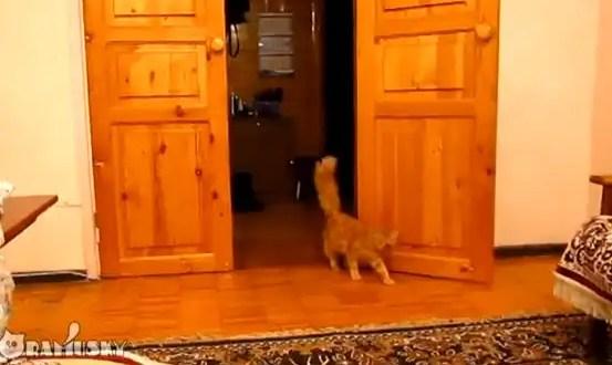 Video: Conoce al gato que le teme a Super Mario Bros.
