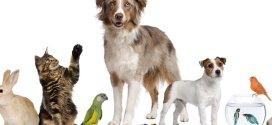 Conoce las enfermedades que puede contagiarte tu mascota