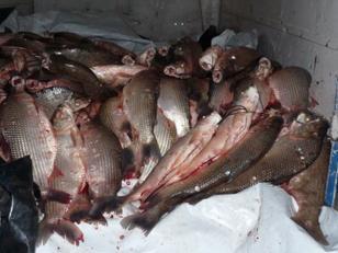 Gendarmería Nacional le secuestró a un camionero 800 kilos de pescado ilegal