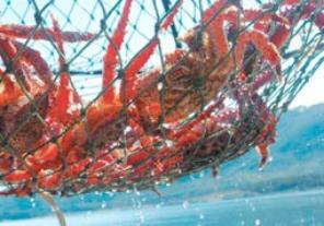 Porrrogan medidas para la pesca de la centolla