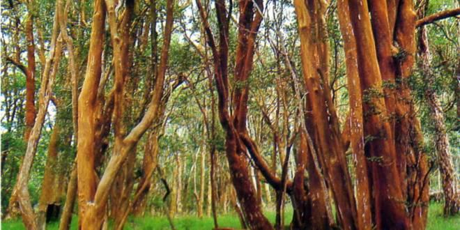 6 de noviembre: Día de los Parques Nacionales Argentinos 2