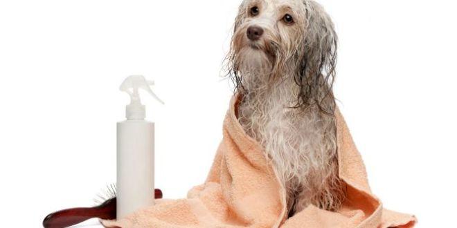 Como hacer champú casero para perros