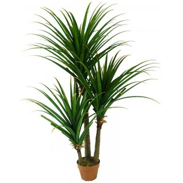 Plantas que purifican el aire de tu casa
