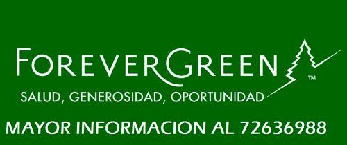 forevergreen - copia