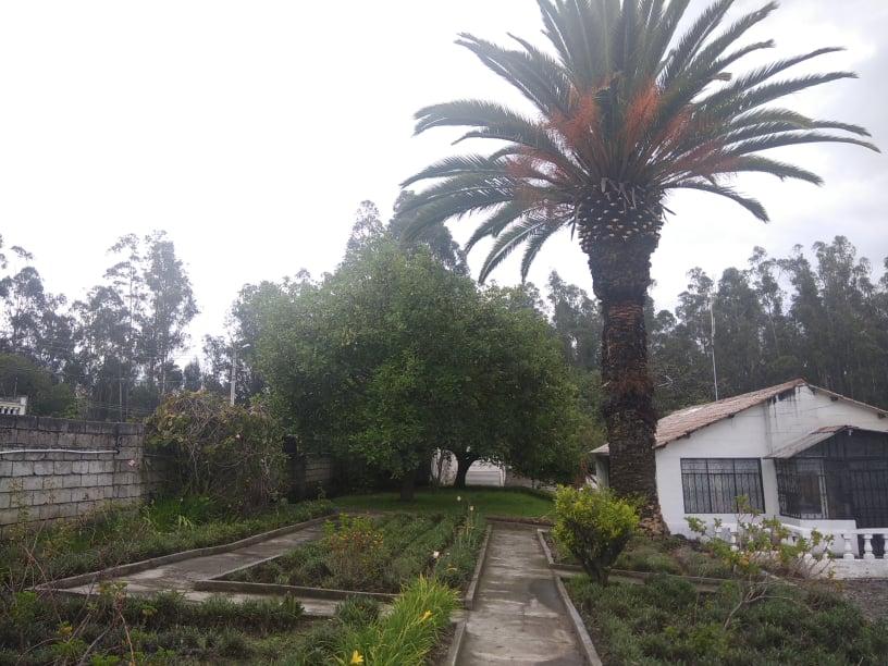 Jardin y arbol de aguacates