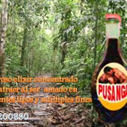 pusanga peruana