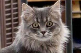 Trucos para descifrar el lenguaje de tu gato