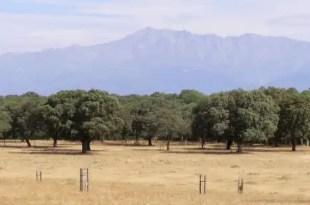 Cospedal quiere vender montes públicos para hacer cotos de caza