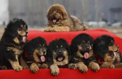 Insólito: Pagan 1,4 millones de euros por un perro-1