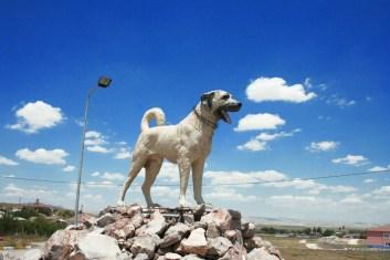Kangal Köpeği