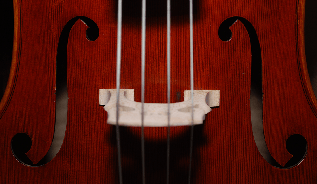 Close-up of Cello