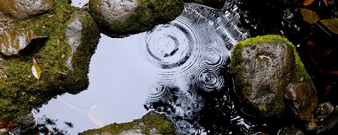 Ripple in Pond
