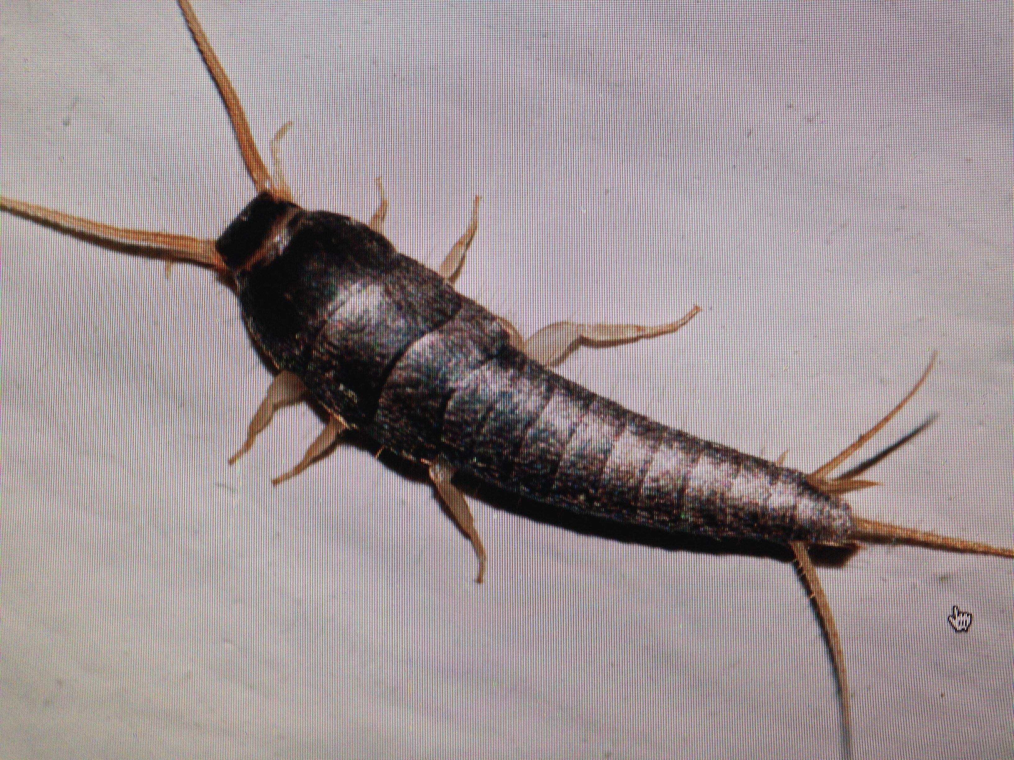 Silverfish dont grieve  Sixth in Line