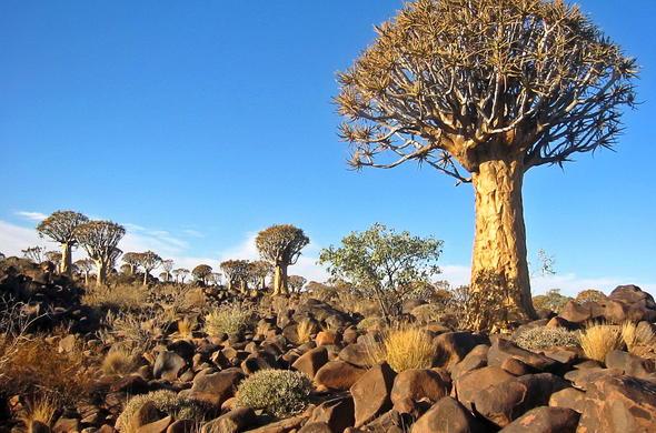 Resultado de imagen de el Namib y el Kalahari.