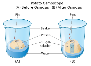 parts of a cell diagram wiring for hunter ceiling fan structure and function cells the basic units life siyavula figure 2 16 using potato to investigate osmosis