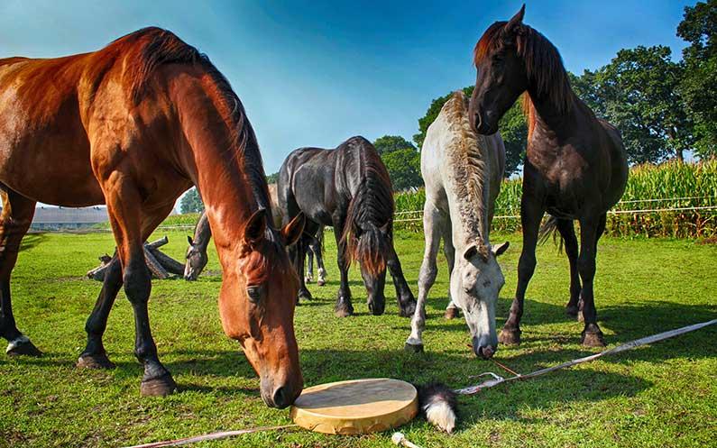 Paard en Sjamaan Weekend 3, 4 en 5 juli