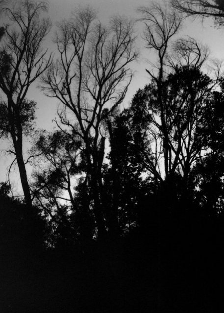 GilaRiverTreesSilhouette 5x7