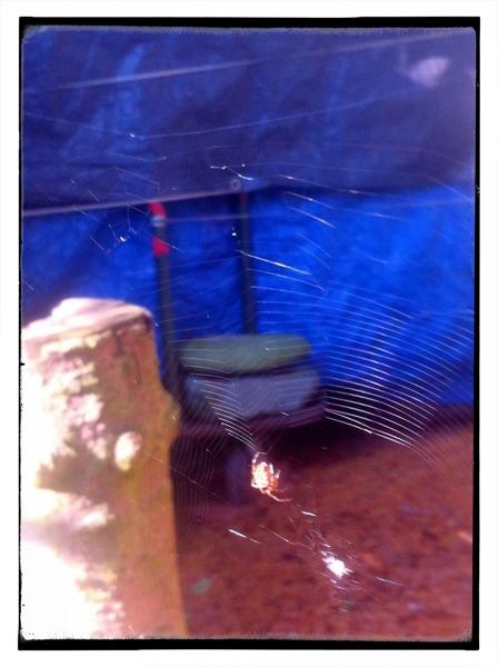 organic mosquito net