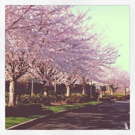 Portland Spring Flowers