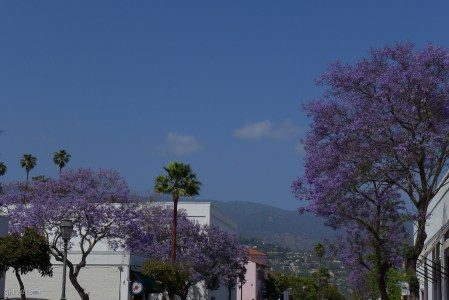 More lilac trees.