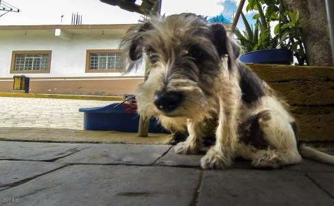 The dogs here in Mexico are so frickin' adorable! Terriers seems to be a fav. : )