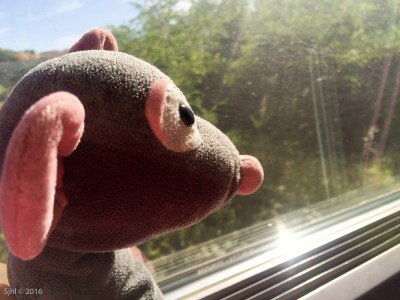 Pedrata liked the train ride too.